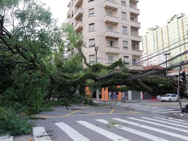 Uma árvore de grande porte é vista caída nas esquinas da rua Eça de Queiroz e Cubatão, no bairro de Vl. Mariana, durante a manhã desta segunda feira, após a região ser atingida por uma forte ventania durante chuva na última noite (Foto: Nelson Antoine/ Estadão Conteúdo)