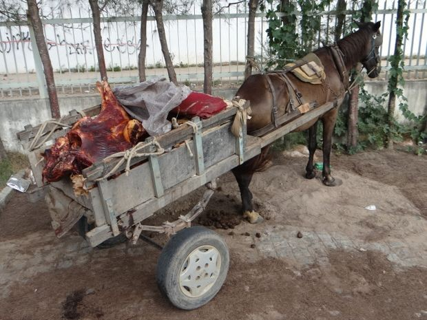 Cerca de 200 kg de carne clandestina foram apreendidos nesta quarta-feira pela Polícia Civil em Aracaju (Foto: Divulgação/PC-SE)