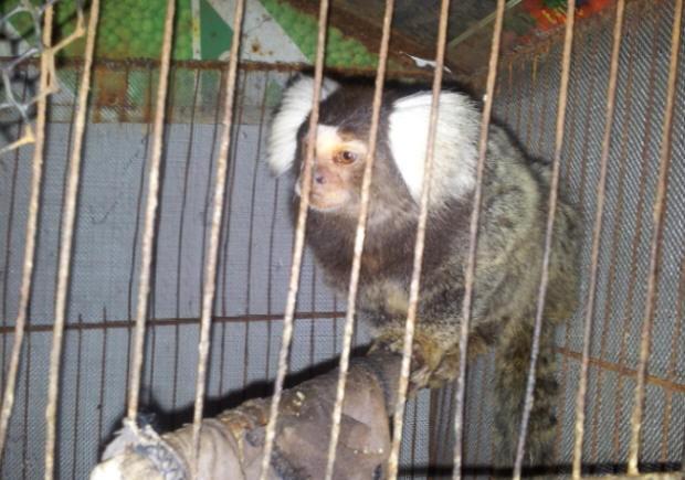 Animal foi encontrado em uma gaiola pequena e era alimentado apenas com pão (Foto: Paula Araújo/TV Tribuna)