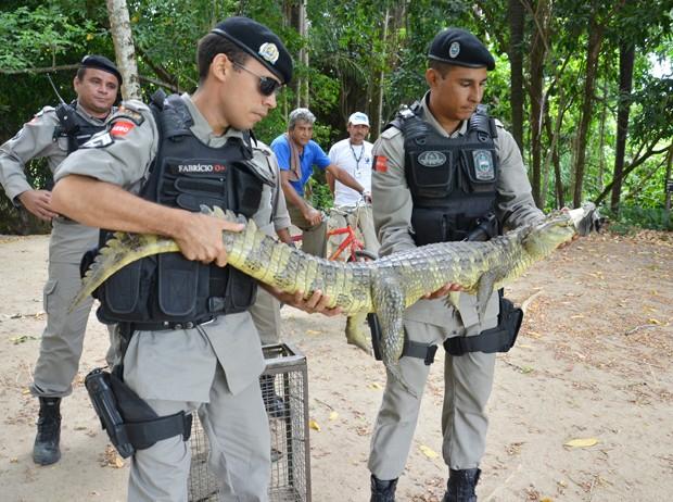 Jacaré foi capturado em um sítio em Santa Rita (Foto: Walter Paparazzo/G1)
