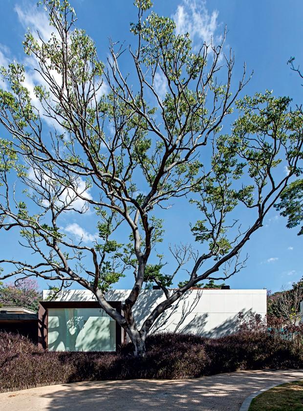 Fachada | O arquiteto Roberto Migotto optou por usar o Dekton® como revestimento externo neste projeto (Foto: Carlos Piratininga/Divulgação)
