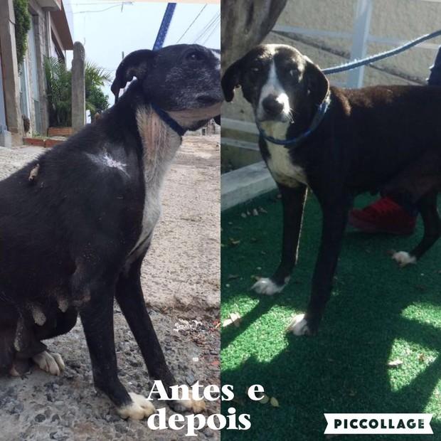 Animal resgatado por vanessa mesquita antes e depois (Foto: Reprodução/Arquivo Pessoal)
