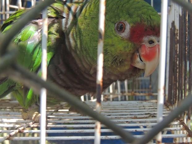 Aves são a classe que mais sofrem com o trágico de animais no estado (Foto: Melina Castro/G1 SC)