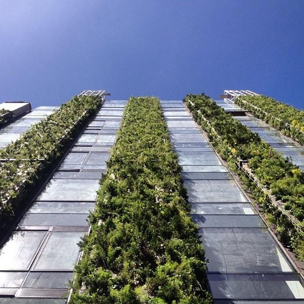 O maior jardim vertical do mundo está na Colômbia (Foto: Reprodução)