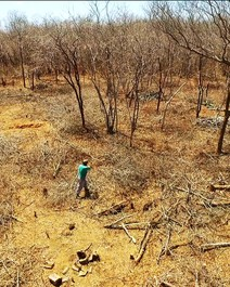 Um século depois, drama da seca se repete no Ceará