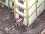 Grupo contesta laudo de explosão em prédio no Rio e quer nova perícia