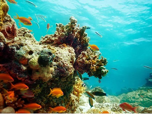 Corais (Foto: Thinkstockphotos)