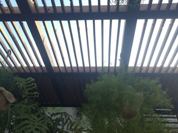 Teto verde na Casa Cor em Goiânia, Goías (Foto: Danielle Oliveira/G1)