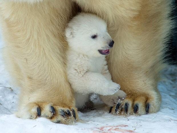 O filhote brinca com a mãe em zoológico da Rússia (Fot Ilnar Salakhiev/AP)