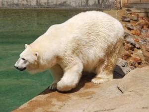 Urso Wang, companheiro de Geebee, está em luto (Fot Johannesburg City Parks and Zoo/Divulgação)
