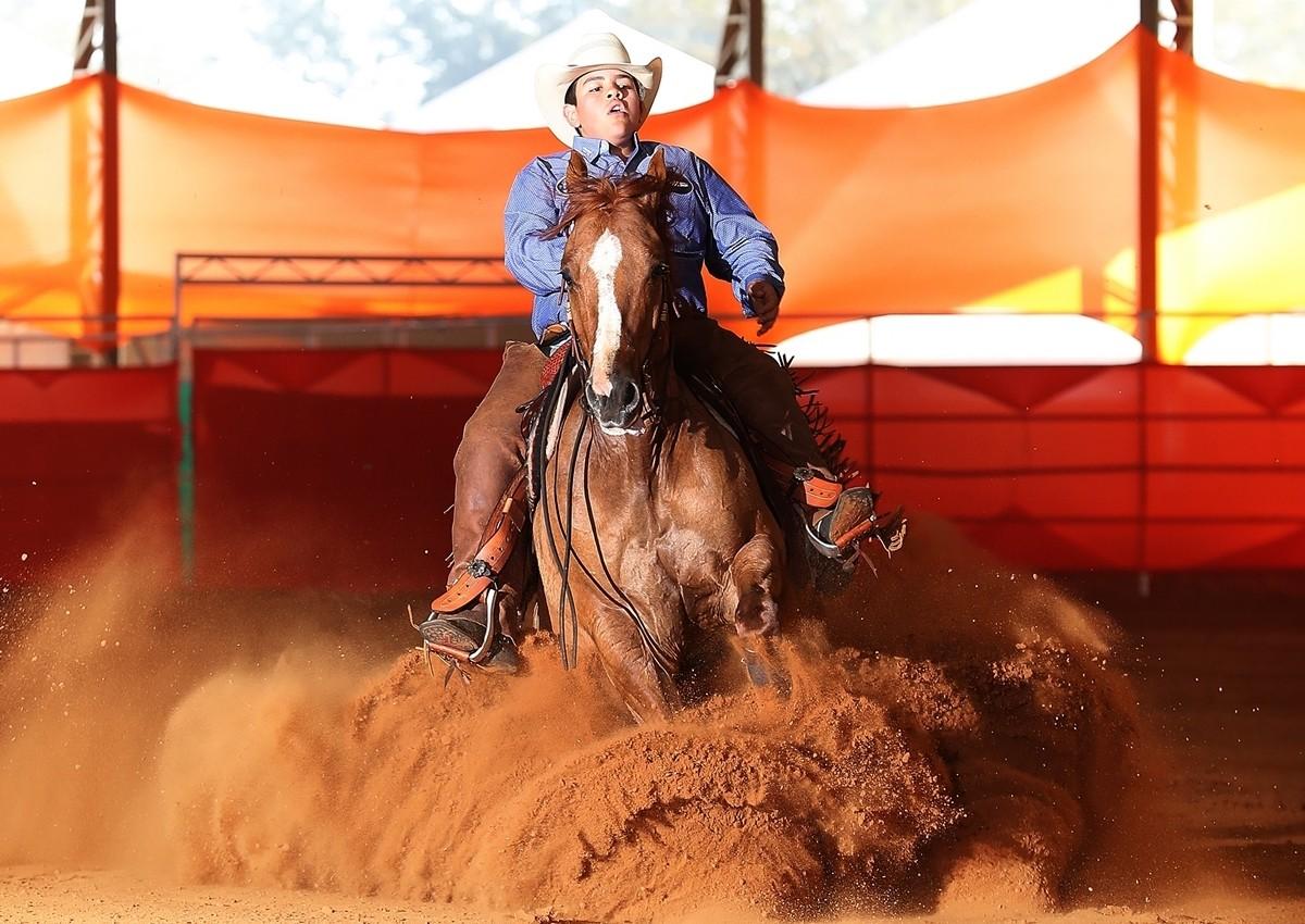 cavalo-cavaleiro (Foto: Gerson Verga/Divulgação)