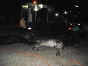 Animais morrem depois de falha em ar-condicionado, em Talismã (Foto: Divulgação/Defesa Civil)