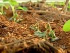 Tempo seco atrapalha o andamento do plantio da safra de soja em MT