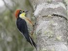 Aves ameaçadas de extinção são protegidas na região de Itapetininga
