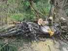 Motociclista morre após ser atingido por árvores entre Lavras e Ingaí, MG