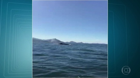 Baleia é vista no mar da Barra da Tijuca