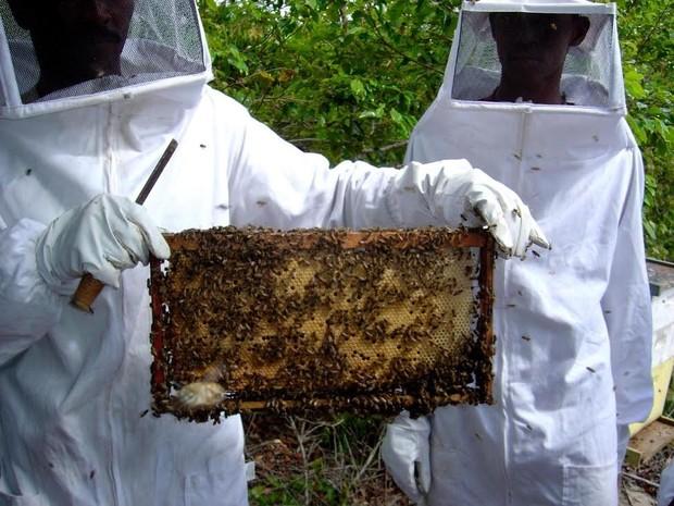 Apicultores do Espírito Santo produzem 814 toneladas de mel (Foto: Divulgação/ Seag)