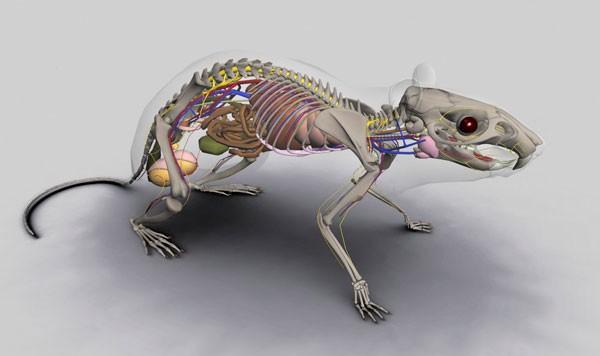 E-SQUELETO: Modelos virtuais permitem ver em detalhes músculos e ossos animais  ao alcance do mouse (Foto: reprodução)