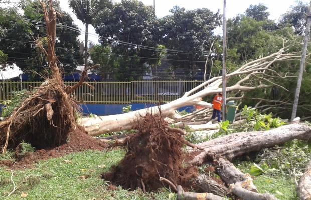 Queda de árvore na região do Ibirapuera, em São Paulo, após chuvas de verão no final de 2014 (Foto: ÉPOCA)