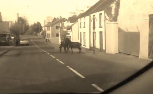 Cena foi registrada por condutor que passava pelo local (Foto: Reprodução/YouTube/Anglo Celt)