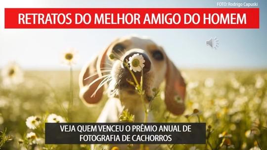 Veja as 30 imagens vencedoras do prêmio anual de fotografia de cachorros