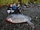 Peixe gigante é encontrado em praia no Alasca