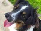 Cão com 2 focinhos é adotado por dono de 'show de horrores' nos EUA