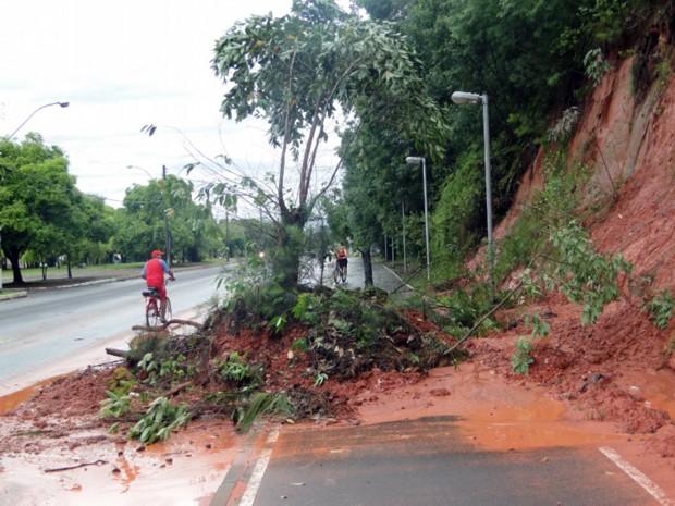 Árvore cai sobre ciclovia na Avenida dos Municípios, em Campo Bom (Foto: Adão Moraes Júnior/Arquivo pessoal)