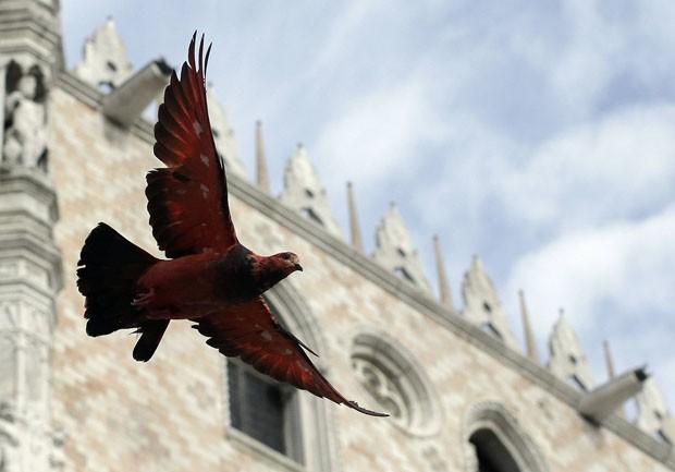 Pombo vermelho voa na praça mais famosa de Veneza (Foto: Tony Gentile/Reuters)