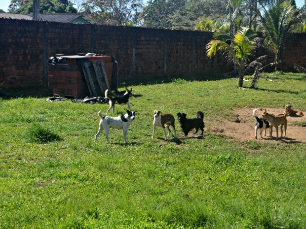 ONG vai realizar feira de adoção para se desfazer de animais