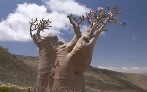 'A Jornada da Vida' visita ilha com espécies de 50 milhões de anos (Rede Globo)