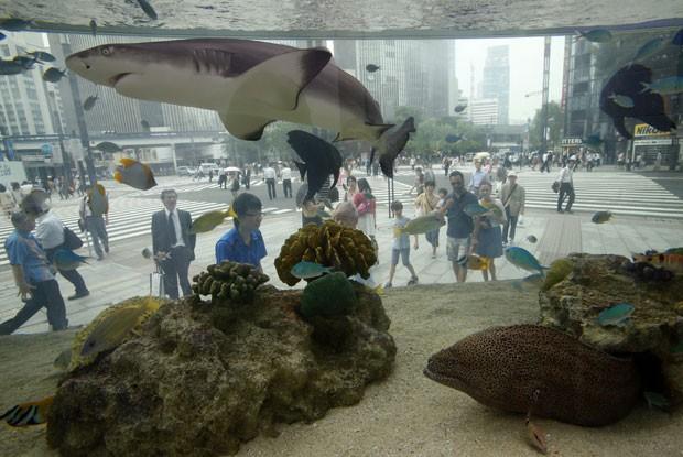 Um aquário instalado em um edifício em Tóquio, no Japão, permite aos pedestres que circulam pelo distrito comercial de Ginza observar tubarões e outros peixes originários da região de Okinawa (Foto: Shizuo Kambayashi/AP)