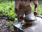 Órgãos vão realizar força-tarefa para combater mosquito Aedes aegypti