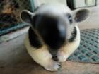 Zoo de Brasília recebe filhotes de antas, corujas e tamanduás; veja fotos