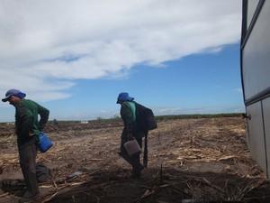 Cortadores de cana chegando para mais um dia de serviço (Foto: Lúcio Verçoza/Arquivo Pessoal)