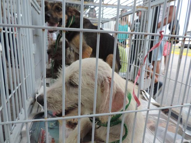 Quem quiser adotar um animal pode entrar em contato com a Seda através dos telefones (81) 3355-8369 ou 3355-9413 (Foto: Katherine Coutinho/G1)