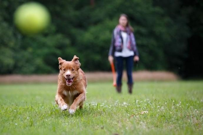 Motorola O pulo do seu cachorro para pegar um biscoito (Foto: Divulgação)