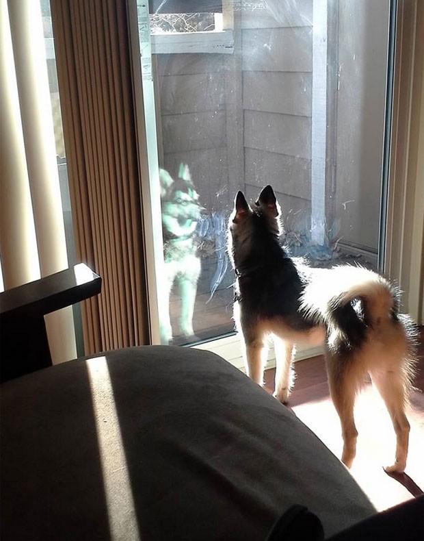Foto mostra reflexo de cão que se parece com holograma da saga Star Wars (Foto: Reprodução/Reddit/Sabine Astroph)