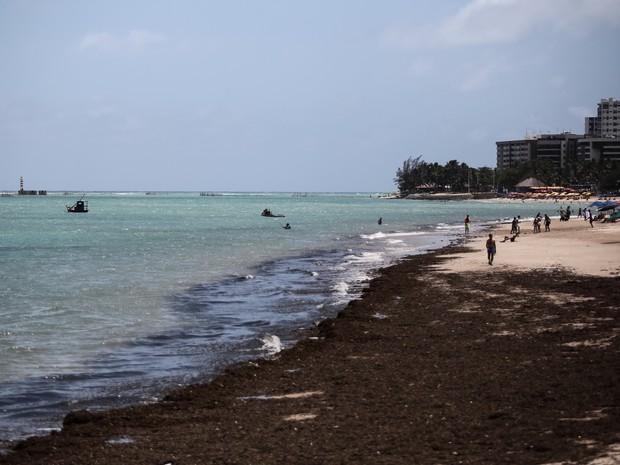 Algas marinhas misturadas com lixo foram vistas no local onde mancha apareceu (Foto: Jonathan Lins/G1)