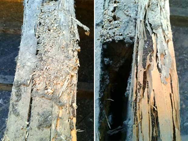 Infestação de cupim danificou madeiramento de telhado do Colégio Técnico de Campinas (Cotuca), vinculado à Unicamp (Foto: Reprodução EPTV)
