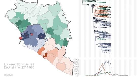 Cientistas analisam 1.610 genomas para 'seguir passos' da epidemia do ebola