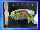 Operação da Polícia Civil identifica grupo envolvido com tráfico de drogas