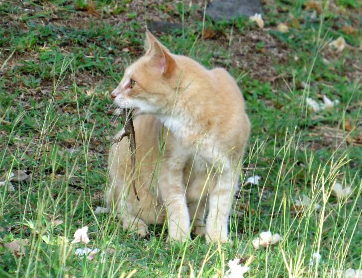 Gatos selvagens Noronha