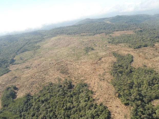 Foram desmatados 89 hectares acima do que era permitido pelo IAP, diz Polícia Ambiental (Foto: Divulgação/Polícia Militar Ambiental)