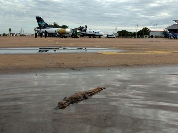 Animal estava em poça d'água formada após chuvas na cidade (Foto: Luis Silva/Arquivo Pessoal)