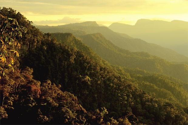 Imagem da Amazônia peruana, região onde os lagartos foram encontrados (Foto: Reprodução/Zookeys)