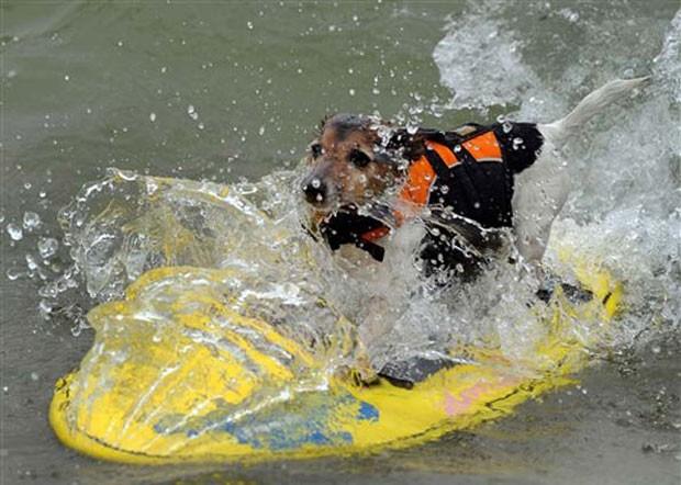 Cachorro surfa durante competição em Imperial Beach (Foto: Gabriel Bouys/AFP)
