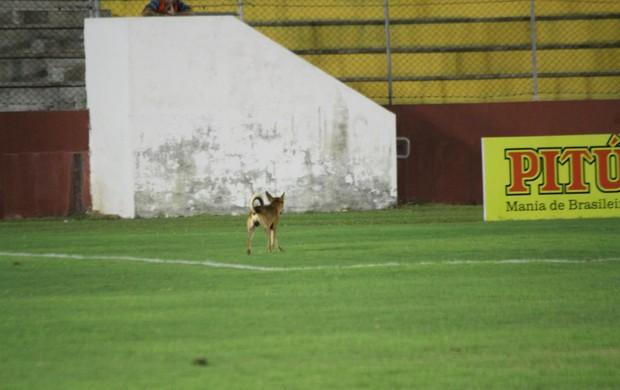 Cachorro Barretão Globo FC x Santa Cruz de Natal