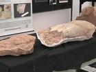 Fósseis que indicam vida há milhões de anos são encontrados em Marília