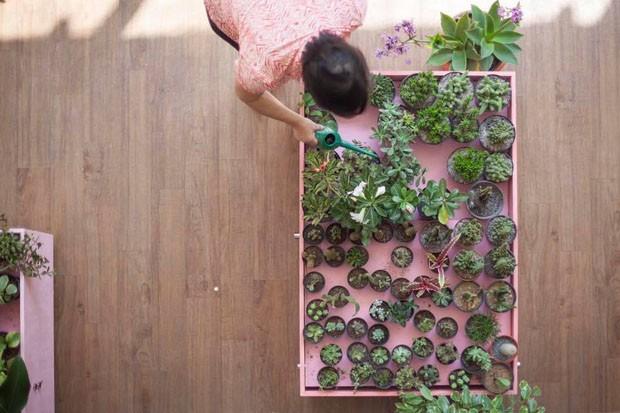 Plantas, informação e design: a nova loja da Selvvva, em SP (Foto: Divulgação)